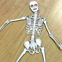 Human skeleton laser cut paper with moving joints